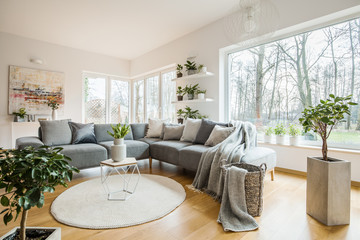 Fresh green plants in white living room interior with corner sofa with pillows and blanket, glass door and small table with tulips placed on round rug