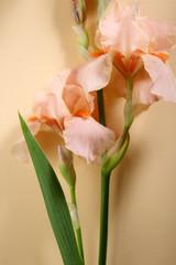 Fresh flowers on pastel background