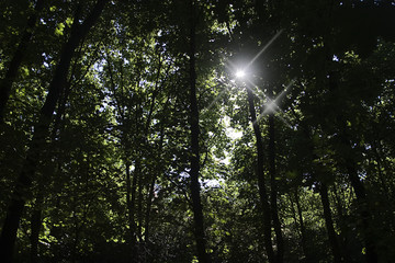 The sun's rays make their way through the forest branches