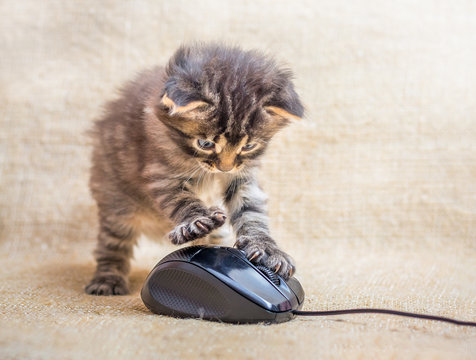 A little kitten is played with a computer mouse. Cat caught a mouse. Fun kids fun