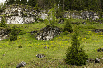 flowering glade on a mountain slope, with limestone rocky ledges and forest in the background