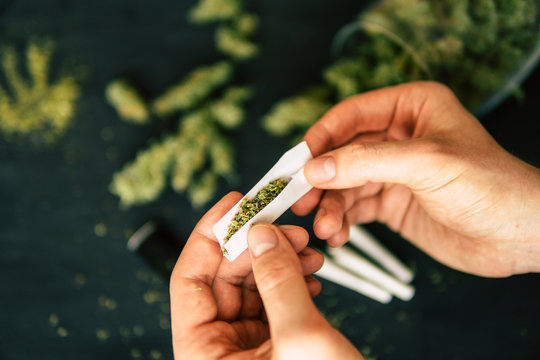 Rolled joint cannabis weed in hand of man Cones bud of marijuana flowers cannabis in hand of man black background