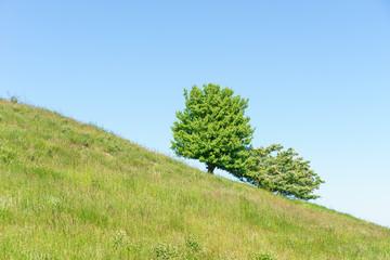 Baum und Strauch auf einer Wiese