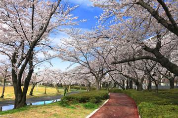 開成山公園の桜(郡山市)