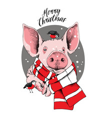 Christmas card. Portrait of the pink Pig in a red striped knitted scarf and with a birds on a gray background. Vector illustration.