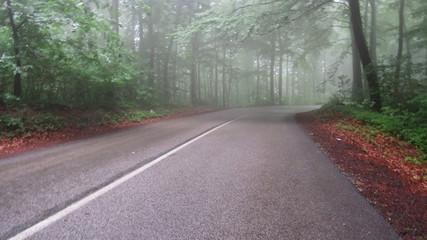 Foggy road through a forest