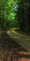 tourist trail in misty woods with old gravel winding road