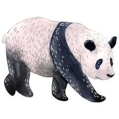 Watercolor panda isolated on a white background. Watercolor illustration.