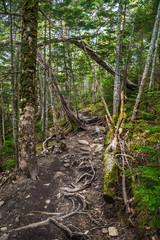 新緑の登山道