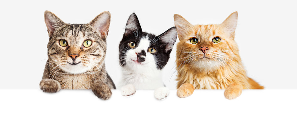 Three Happy Cats Hanging Over Web Banner