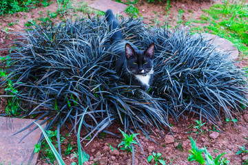 A beautiful black kitty hiding in a decorative flowerbed in the garden.