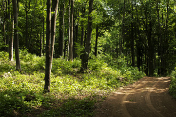 Deep green forest road through the woods landscape
