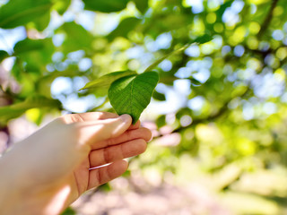 Men's hand touching a single green leaf against beautiful out of focus bokeh background. Feeling unity to nature/ In touch with Nature