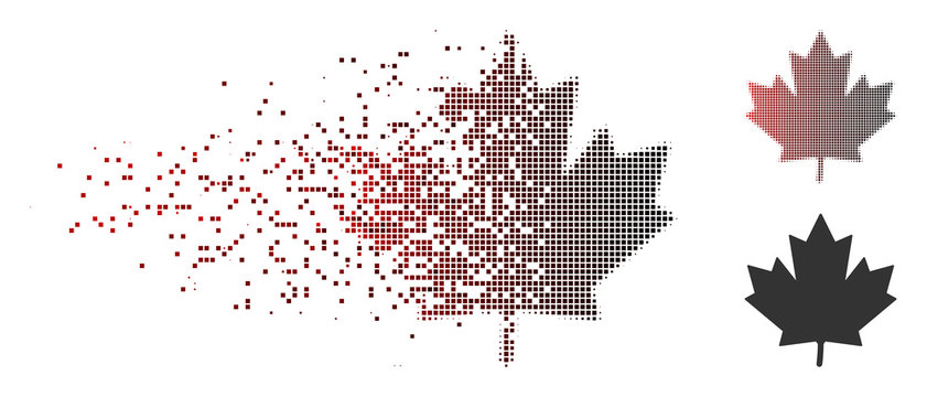 Vector maple leaf icon in dispersed, dotted halftone and undamaged solid versions. Disintegration effect involves rectangle dots and horizontal gradient from red to black.