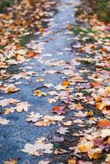 Fallen autumn leaves on wet path