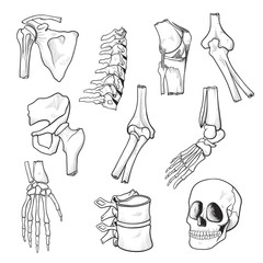 Human bones and joints sketch