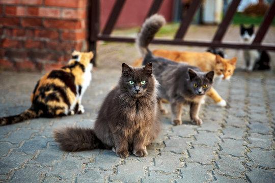Many Homeless Cats