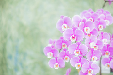 Beautiful Orchid Blooming with Soft Focus and Blur Background