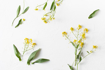 Twigs of winter cress with flowers on white concrete background