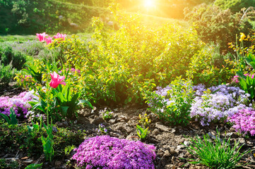 Beautiful flower bed with the first spring flowers.