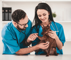 Young veterinarians in vet clinic