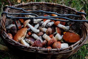 Корзина с белыми грибами и подосиновиками