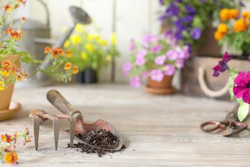 Spring flower gardening