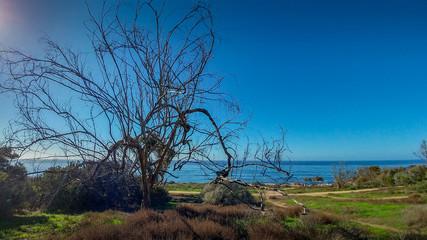 Sunset Cliffs Natural Preserve