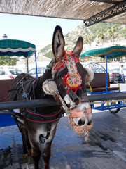 Donkey Taxi in Mijas. Mijas is one of the most beautiful 'white' villages of the Southern Spain