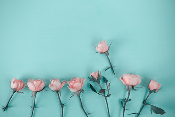 pink roses on a blue background, top view flat lay,