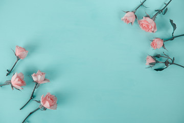 pink roses on a blue background, top view flat lay, toned