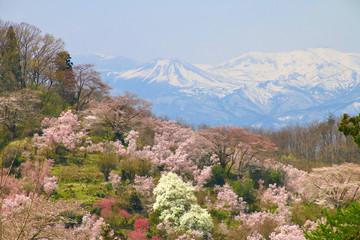 花見山と吾妻小富士(福島県・福島市)