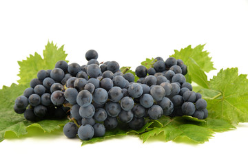 Blue grapes and bright grape leaves on white background isolated.