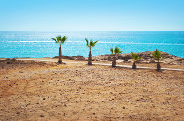 five short palm trees on the barren beach