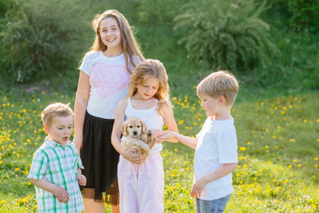 A group of four children playing and caress little puppy dog gold spaniel in summer glade outdoor.