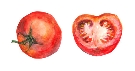 Watercolor painted tomato and half