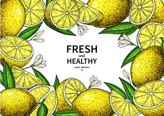 Lemon label vector drawing. Citrus fruit frame template.