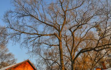 Trees at winter park