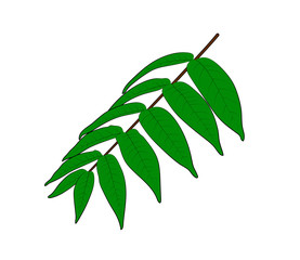Vector illustration, isolated smooth sumac branch with green leaves, outline hand painted drawing