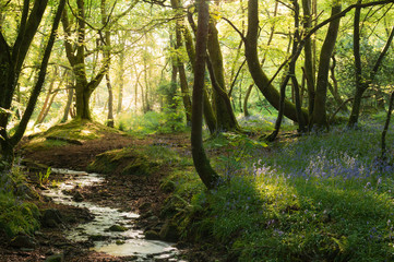 Stream of water in woodland, Cornwall