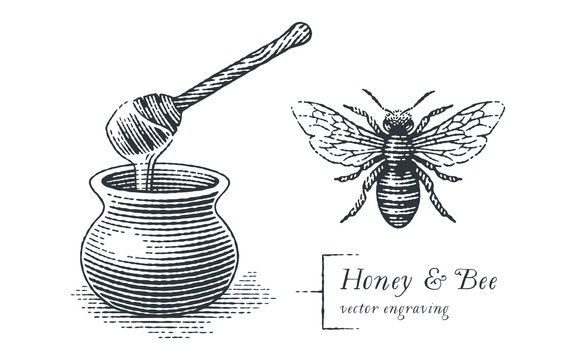 Honey pot and bee. Hand drawn engraving style illustrations.