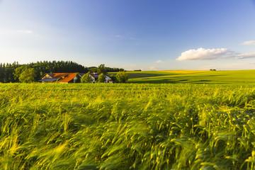 Green field, Innviertel, Austria