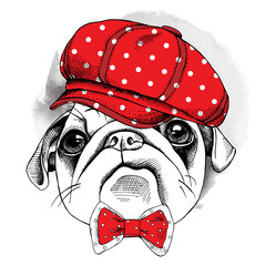 Portrait dog Pug in red cap and tie. Vector illustration.