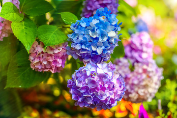 colorful rainbow flowers of bright color, beautiful background