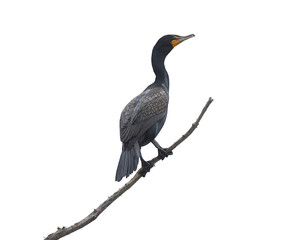 A Cormorant Perched On a Branch
