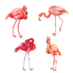 Set of watercolor flamingo