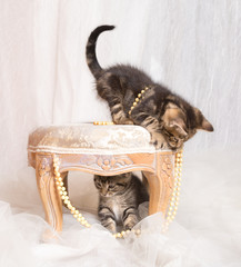 Tabby kittens siblings playing with pearls with one kitten under a stool