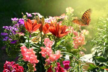 Schmetterling 464