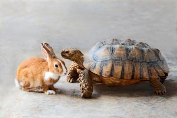 rabbit and turtle.