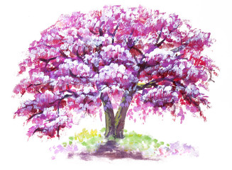 Pink flower, Cherry blossoms tree isolated on white background. Sakura watercolor